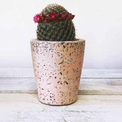 Barry The Cactus Small Pink Terrazzo Pot