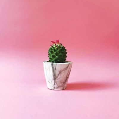 Barry The Cactus Small Marble Pot
