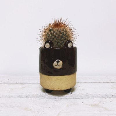 Barry The Cactus Forest Creatures - Bear Pot